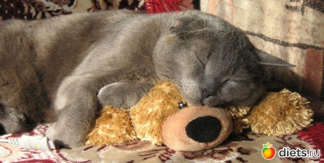 чему к снится маленькие котики