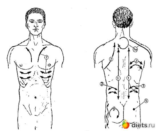 Схема баночного массажа. 1