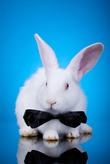 Банкет «по-кроличьи»: и вкусно, и полезно