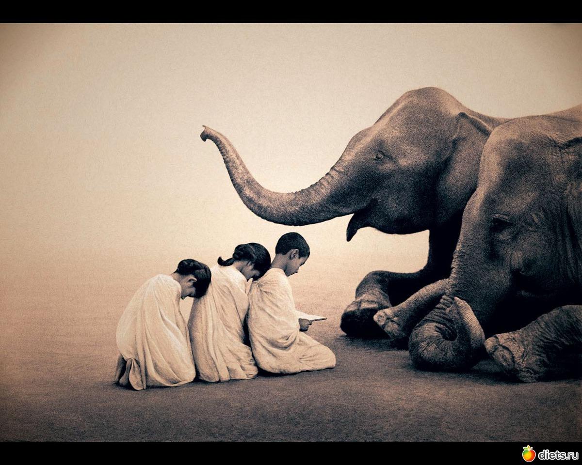 Смотреть сношение слонов 14 фотография