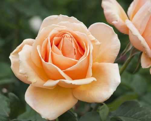 экзотические цветы фото и названия: