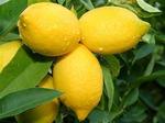 Лимон на страже здоровья и стройности