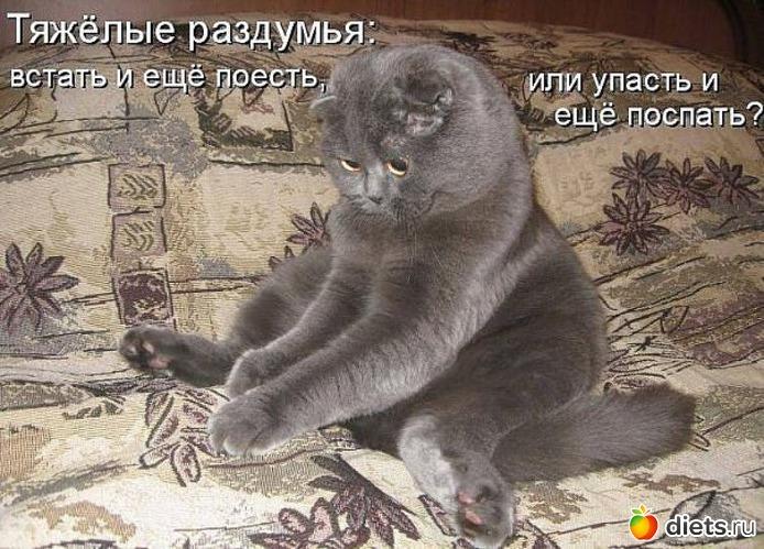 http://www.diets.ru/data/cache/2012jan/10/47/542815_96579-550x500.jpg