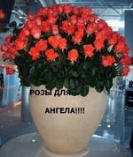 http://www.diets.ru/data/cache/2012jan/13/06/550123_72668-150x0.jpg