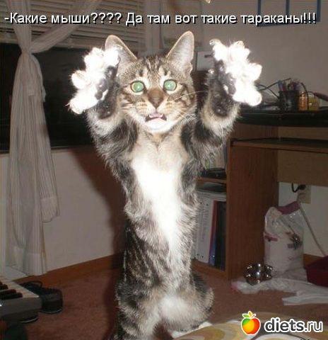 http://www.diets.ru/data/cache/2013aug/27/58/1570289_74066.jpg