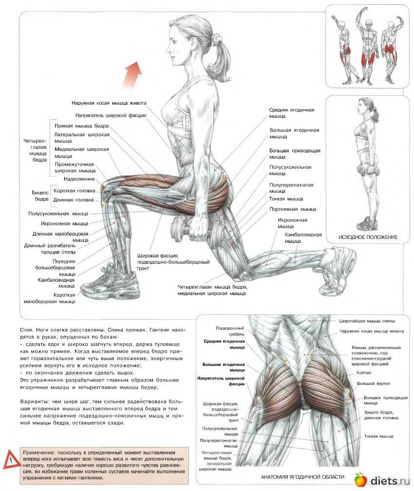 Упражнения с гантелями для ног в домашних условиях
