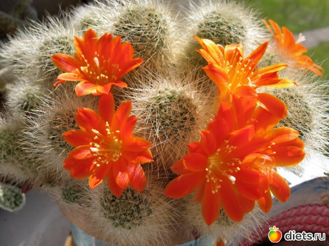 Первое, что нужно знать, так это Случается, что кактусы годами не