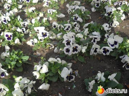 Цветы которые пахнут днём