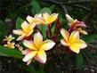 Цветы дома: как украсить дом живым великолепием