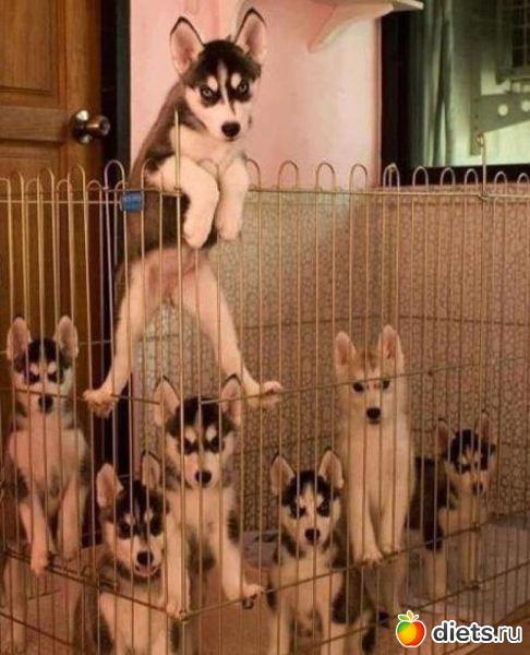 Киев объявил карантин в Днепровском районе из-за вспышки бешенства среди домашних животных - Цензор.НЕТ 8995