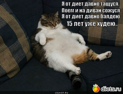 Фото приколов про диету