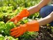 Как уберечь руки в дачный сезон?
