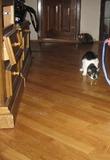 мои кошки и последствия от них