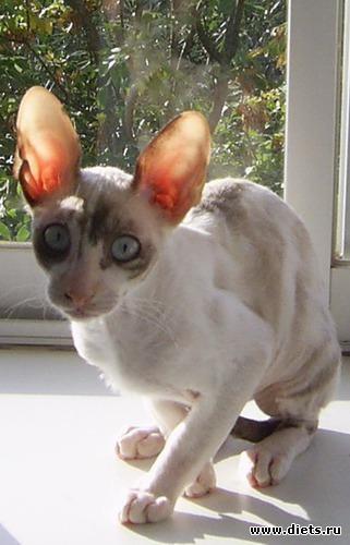 Кошка Дана, альбом: Кошка Дана