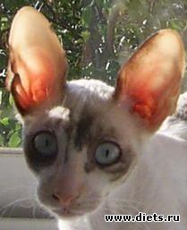 Кошка Дана
