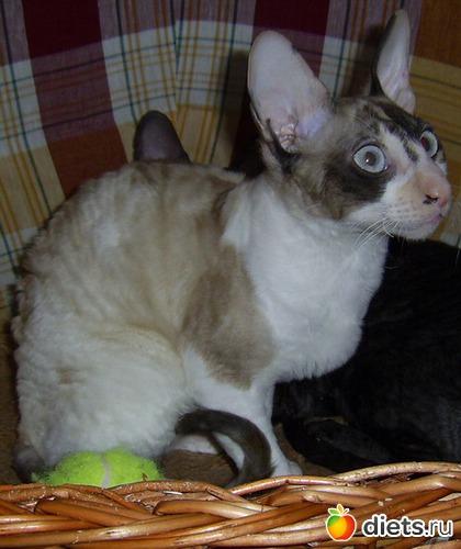 Кот Венди, альбом: Кошка Дана