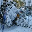 Новая жизнь – с первым снегом!