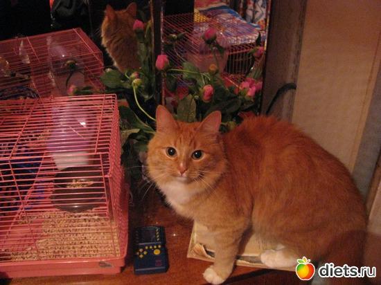 Муся, альбом: Кошки