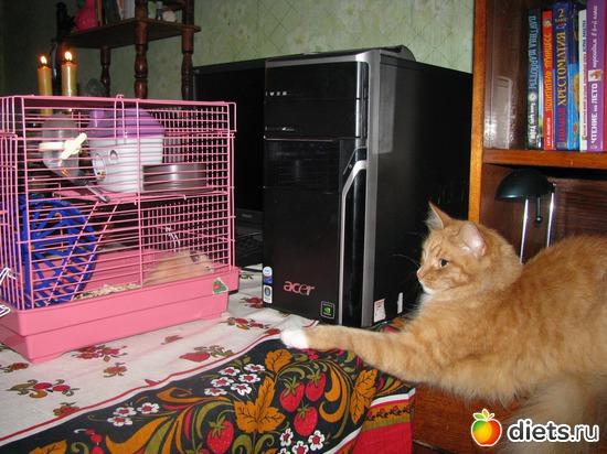 Муся и хомяк, альбом: Кошки