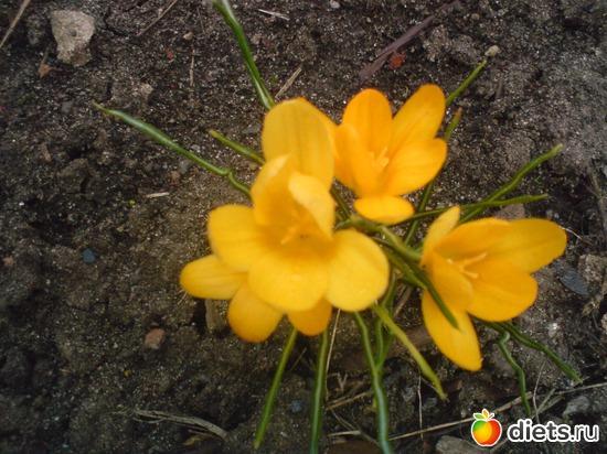 15 фото: Мои цветы.