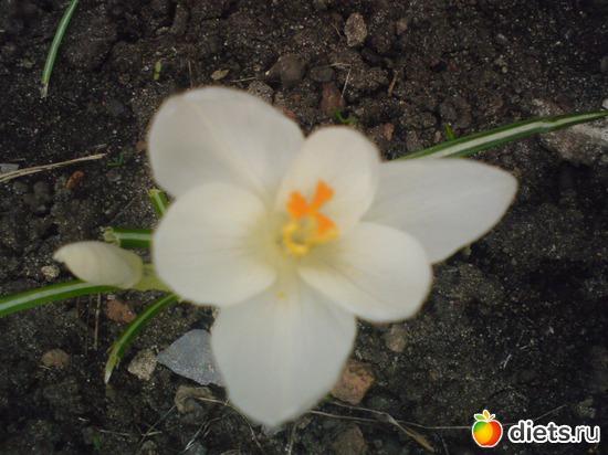 17 фото: Мои цветы.