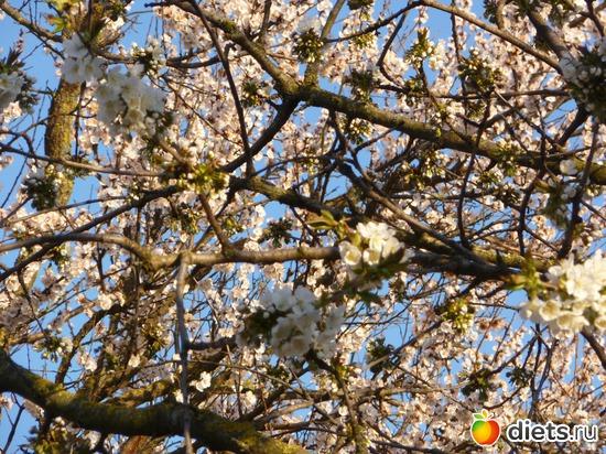 моя жердёла, альбом: весна