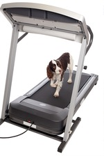 Аnimal-fitness: хочешь похудеть – заведи собаку