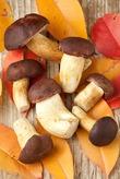 О съедобных грибах