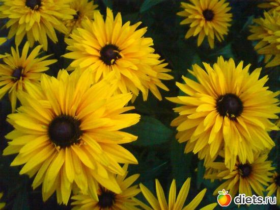 1 фото: Мои цветы.