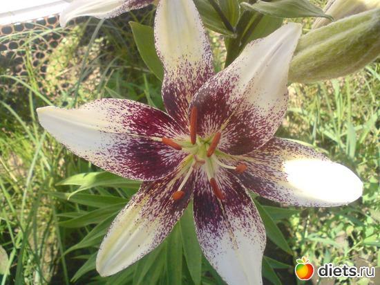5 фото: Мои цветы.