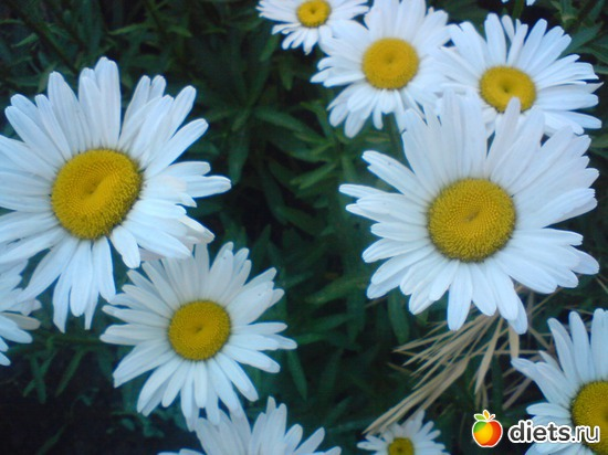 6 фото: Мои цветы.