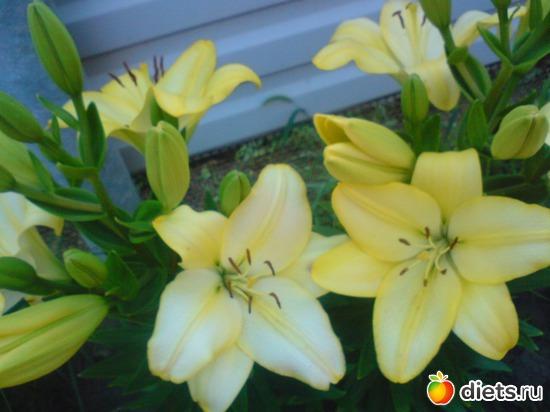 7 фото: Мои цветы.