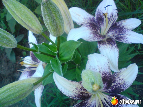 9 фото: Мои цветы.