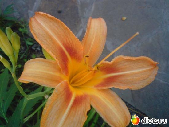 10 фото: Мои цветы.