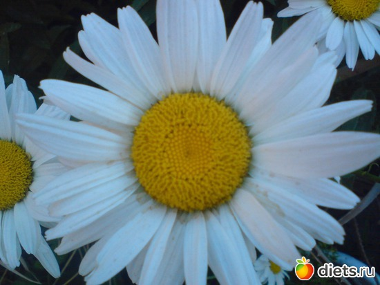 11 фото: Мои цветы.