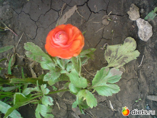 13 фото: Мои цветы.