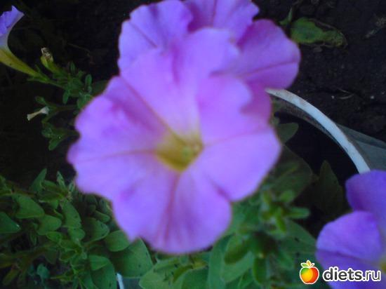 14 фото: Мои цветы.