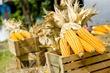 Кукуруза: такая знакомая экзотика