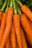 Красна девица морковка
