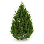 «Вторая жизнь» новогоднего деревца