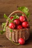 Редис — полезный, вкусный, ранний