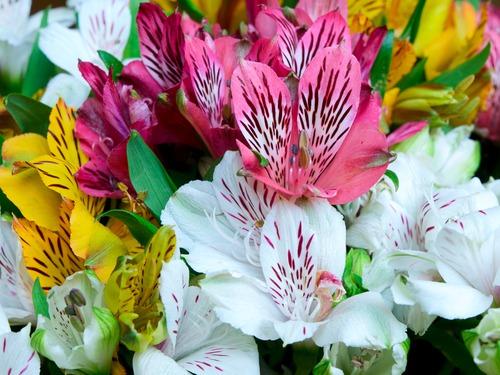 Виды экзотических цветов названия и фото