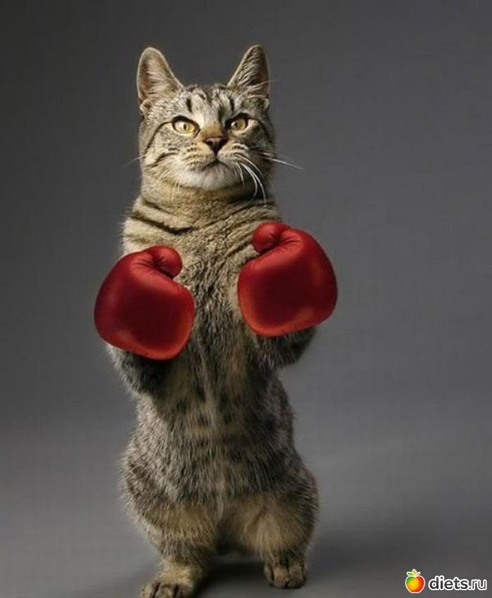 unique male cat names yahoo