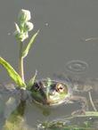 Весной и лягушки хотят быть романтичными