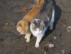 Мартовские коты.