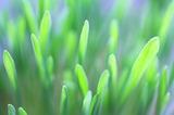 Первые весенние ростки