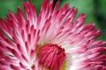 Одни из первых весенних цветов - маргаритки