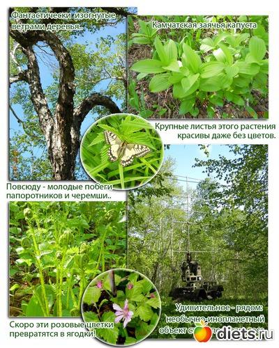 Лес и природа Камчатки, альбом: Лето на Камчатке