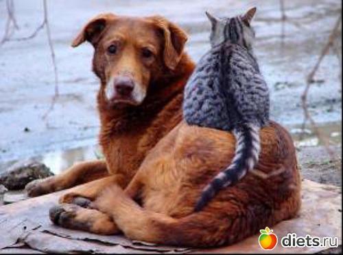 термобелья умерли в один день кошка и собака молодые Norveg