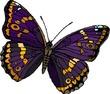 Прекрасное задание на 20.08 для Lady-butterfly!
